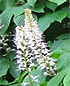 Native Plants to Know